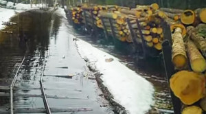 Lumber Train Creeps Over Submerged Tracks!