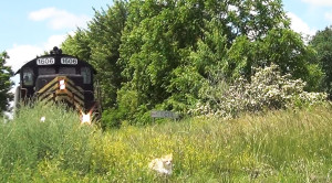 PREX #1606 Chases Cat Out Of The Brush!