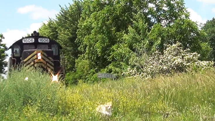 PREX #1606 Chases Cat Out Of The Brush! | Train Fanatics Videos