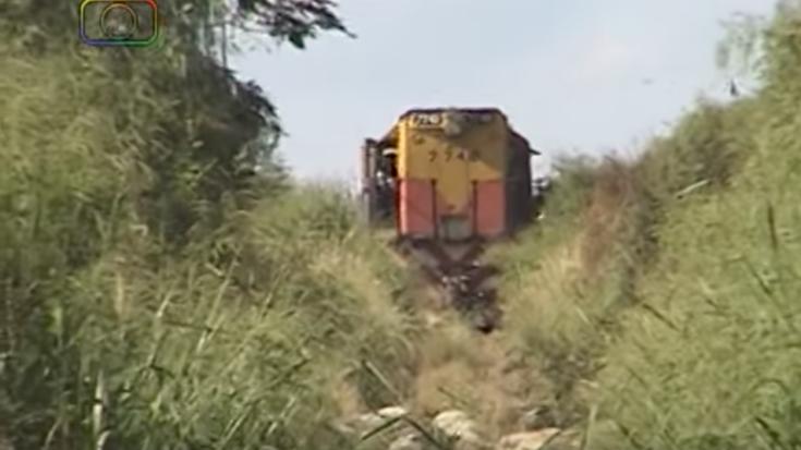 Sheep MOW Crew Busy Clearing The Tracks! | Train Fanatics Videos
